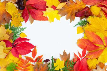 Natural fall leaves frame, top view over white background with copy space