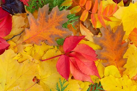 Natural multicolored fall leaves textured background, top view