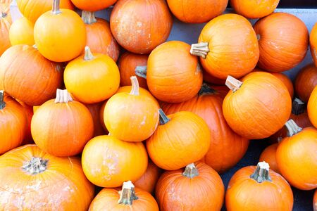 orange raw pumpkins pile on old wooden textured table, top view Imagens