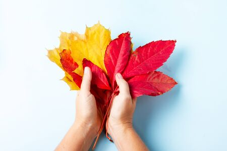 Hands holding fall leaves on blue flat lay autumn background, fall season concept Imagens
