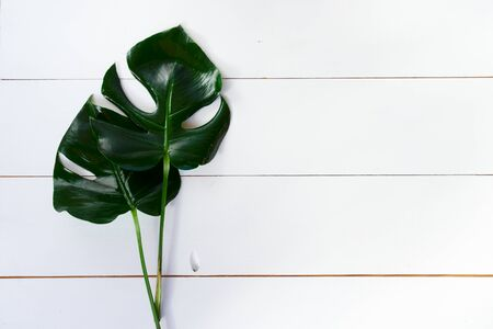 Summer flat lay scenery with tropical leaves on white background with copy space