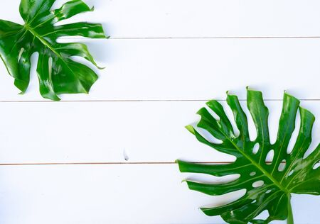 Summer flat lay scenery with fresh tropical fresh leaves on white background with copy space