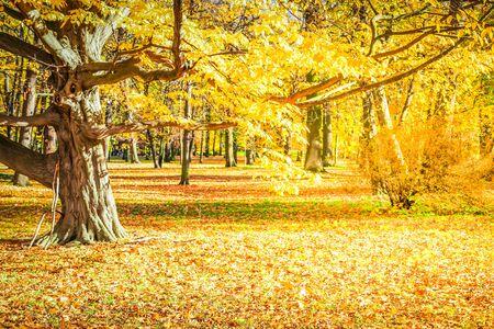 jesienny krajobraz leśny z żółtymi drzewami i opadłymi liśćmi na ziemi, jesienne tło sezonowe, stonowane retro