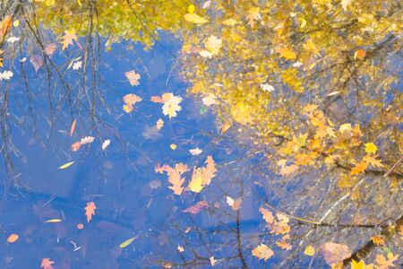 fall leaves floating in the water with fall tree reflections, top view