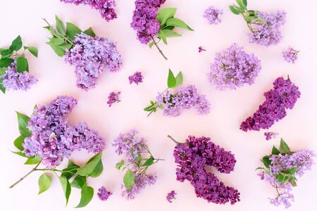 Fresh lilac flowers pattern over pink background flat lay floral composition