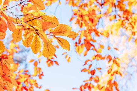 fall yellow leaves on the sunny pale sky background, fall natural seasonal background, retro toned