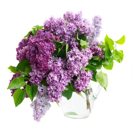Fresh lilac flowers twigs bouquet isolated over white Banco de Imagens