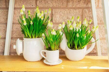 white bluebell flowers in pots
