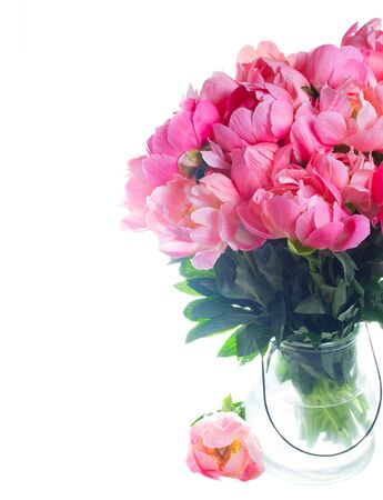 Fresh pink peony flowers bouquet close up isolated on white background