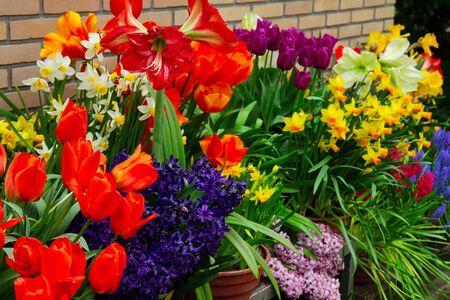 Variedad de flores de primavera en macetas en exhibición en la tienda