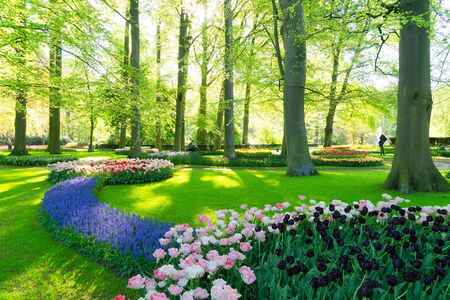 fresh spring lawn with blooming blue flowers and green grass in formal garden