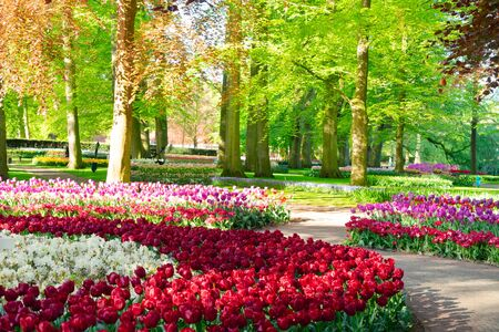 fresh spring lawn with blooming red and white flowers and green tree in formal garden