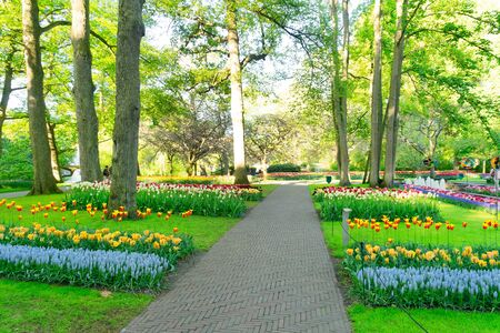 Colourful Tulips Flowerbeds and grass Path in an Spring Formal Garden Zdjęcie Seryjne