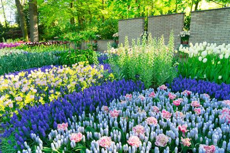 fresh spring lawn with colorful blooming flowers border and green grass