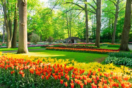 fresh spring lawn with blooming flowers and green grass