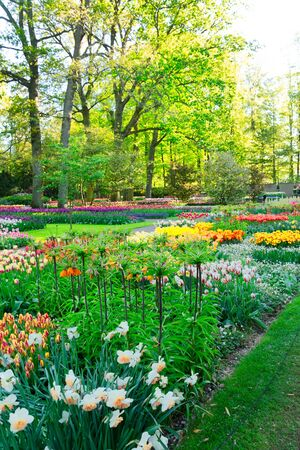 fresh spring lawn with colorful blooming flowers and green grass