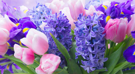 Pink tulips and blue hyacinths flowers close on garden bokeh background