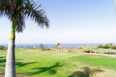 Green golf course at sunny summer day with palm tree Banque d'images
