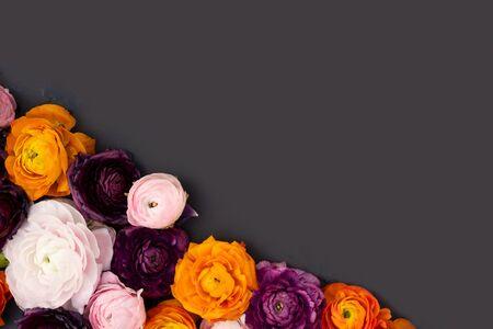 ranunculus flowers border on minimal black background