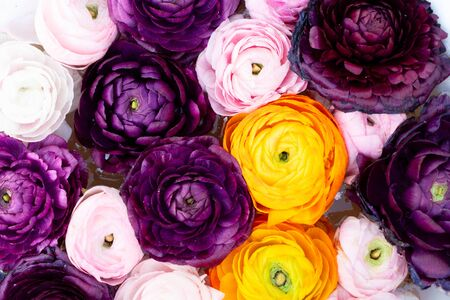 Flowers composition. Floral texture made of ranunculus flowers, flat lay scene