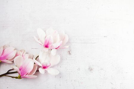Magnolia flowers twig flat lay top view frame on white wooden background with copy space Banco de Imagens