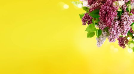 Fresh lilac flowers over sunny yellow background, web banner format with copy space