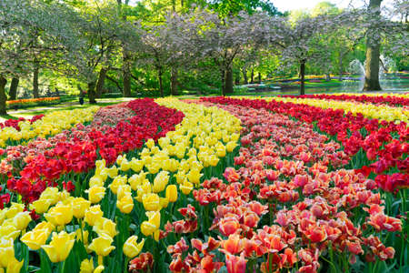 fresh spring lawn with rows of blooming flowers Banque d'images