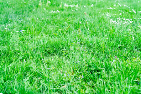 fresh green grass, natural close up background Banque d'images