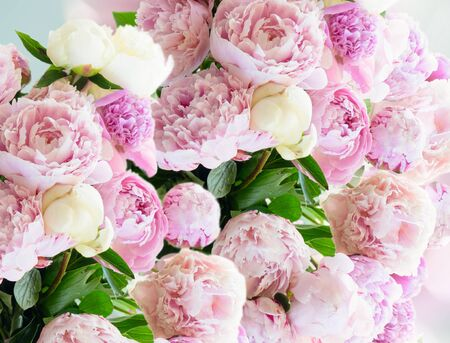 Fresh peony flowers pink and white round bouquet close up Foto de archivo