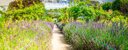 Gverny green garden gallery withlavender flowers and gallery, web banner format with sunshine