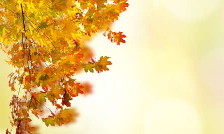 fall red and yellow leaves on defocused bokeh background with sun beams