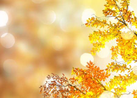 Fresh yellow fall tree foliage on blury park background