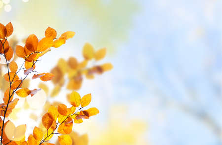 Fresh yellow and orange fall tree foliage on pale cloudy sky background Banque d'images