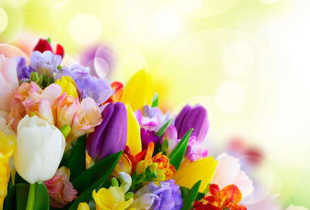Bouquet of tulips and freesias on garden background with copy space
