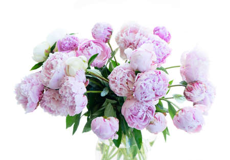 Fresh peony flowers pink and white round bouquet close up isolated on white background