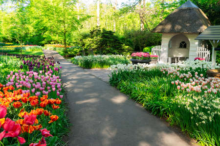 Colourful Tulips, muscari and daffodil flowers mixed Flowerbeds and Stone Pathway in Formal Garden