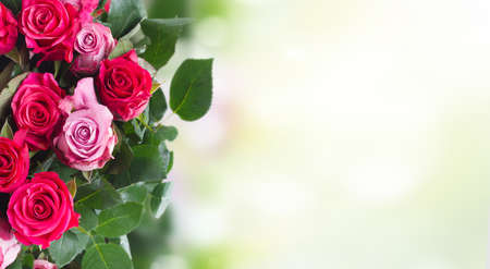 border of pink rose flowers on garden bokeh background with opy space 版權商用圖片