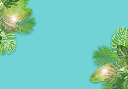 Tropical fresh green leaves on aqua blue background with copy space 写真素材