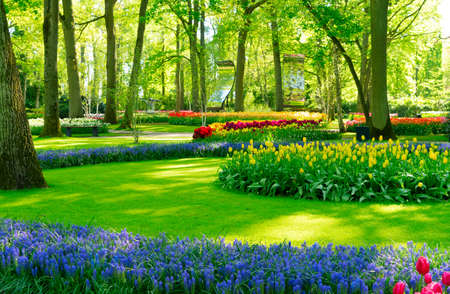 bright spring lawn with blooming blue flowers and green grass in formal garden