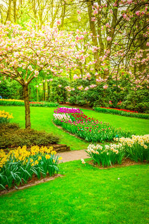 Colourful Blooming cherry tree and flowerbed in an Spring Formal Garden, toned