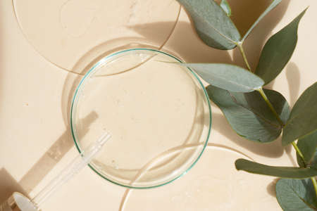 Glass petri dish with transparent pure serum for skin care