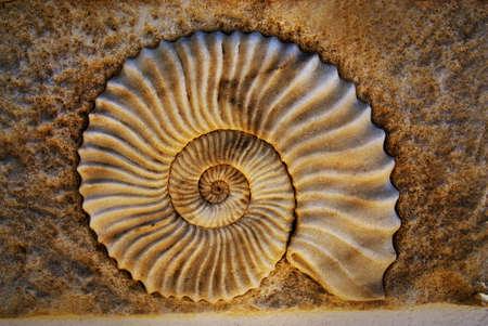chambered: Beautiful seashell
