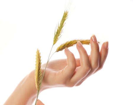 Womans hand with wheat isolated on white background photo
