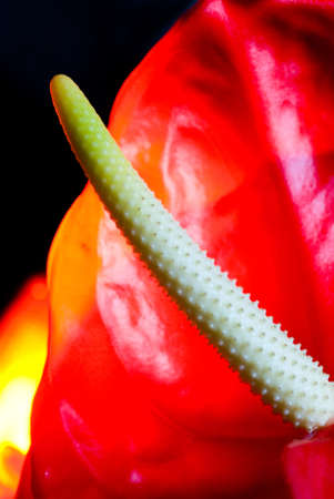 exotic flower: Close-up shot of exotic flower Stock Photo