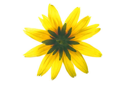 Yellow flower isolated on white background Stock Photo - 2282366