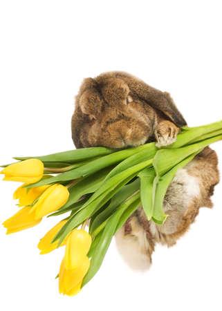 Beautiful rabbit with fresh spring flowers isolated on white background photo