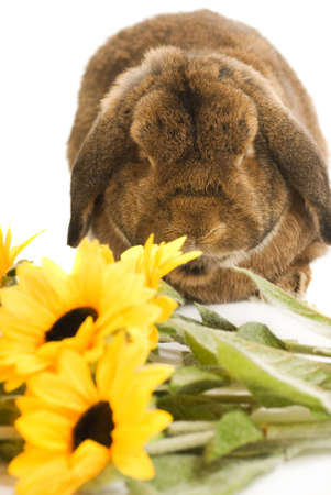 Beautiful rabbit with fresh spring flowers isolated on white background photo