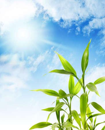 awaking: Bamboo leaves over blue sky