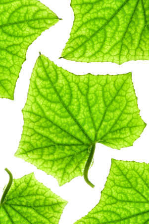 Green leaf pattern Stock Photo - 2617024