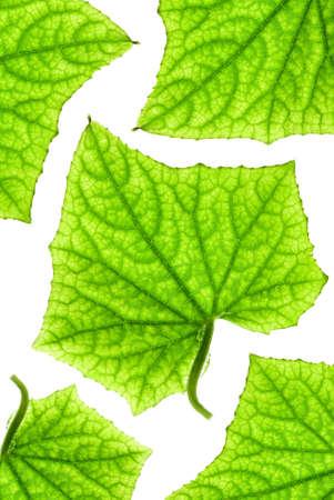 Green leaf pattern Stock Photo - 2617024